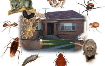 حشرات و مگس فاضلاب