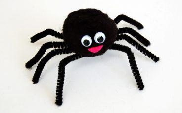 عنکبوت و شناخت آناتومیک آن ها